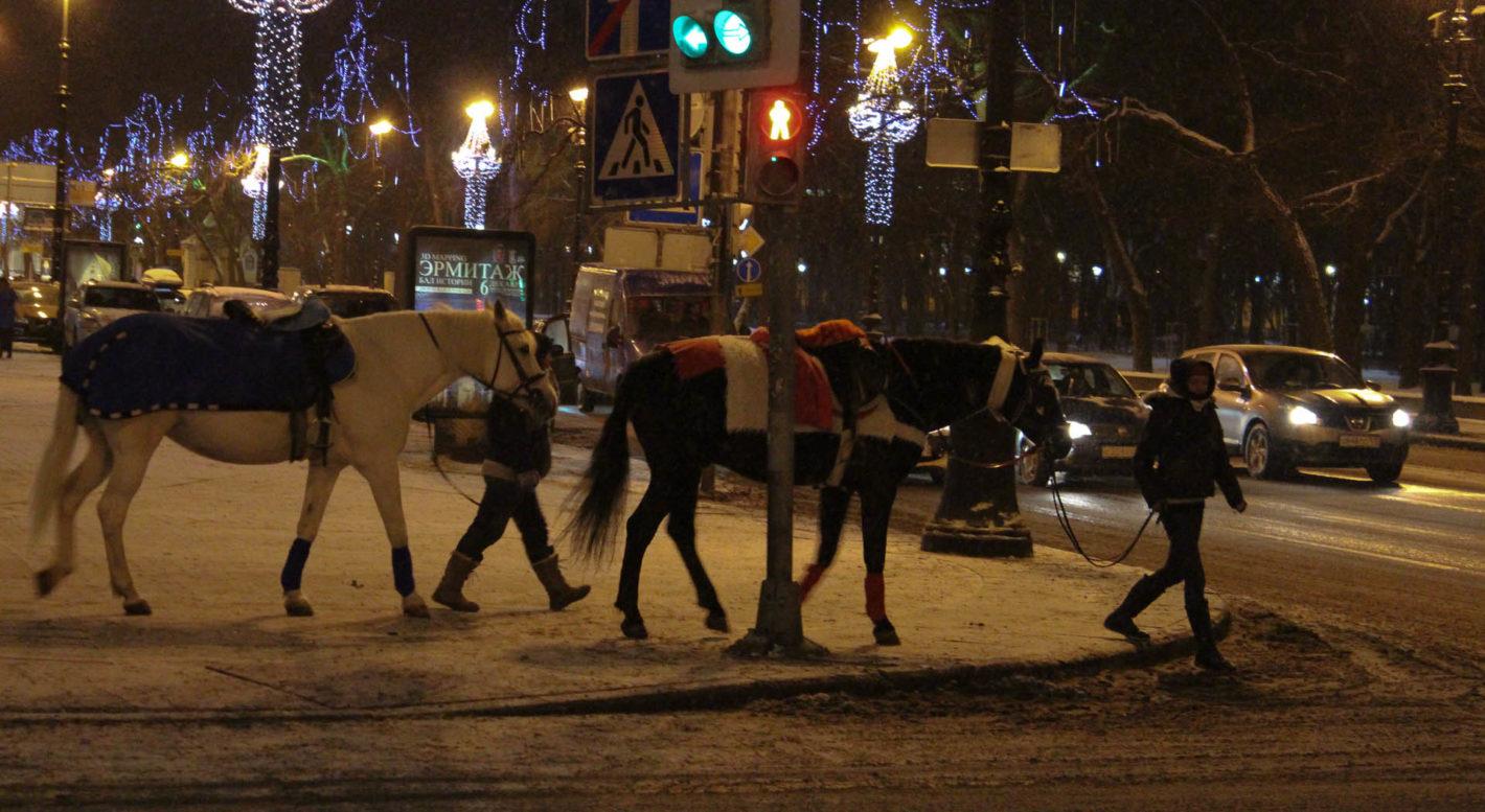 Pferde am verschneiten Gehsteig in St. Petersburg